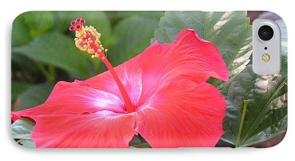 Hibiscus Flower IPhone Case by Deborah Hughes