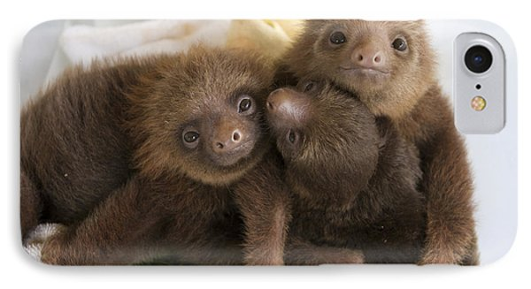 Hoffmanns Two-toed Sloth Choloepus Phone Case by Suzi Eszterhas