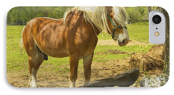 Horse Near Strone Wall In Field Spring Maine IPhone Case by Keith Webber Jr