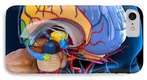 Human Brain Anatomy, Artwork Phone Case by Roger Harris
