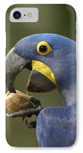 Hyacinth Macaw Anodorhynchus Phone Case by Pete Oxford