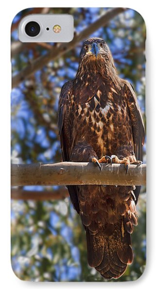 Immature Bald Eagle Phone Case by Beth Sargent