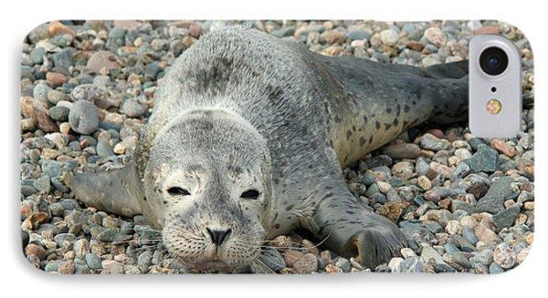 Injured Harbor Seal Phone Case by Ted Kinsman