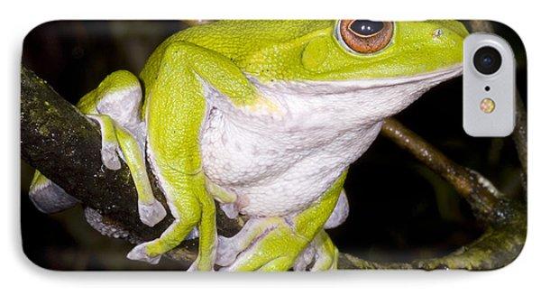 Japanese Rhacophoprid Frog IPhone Case by Dante Fenolio