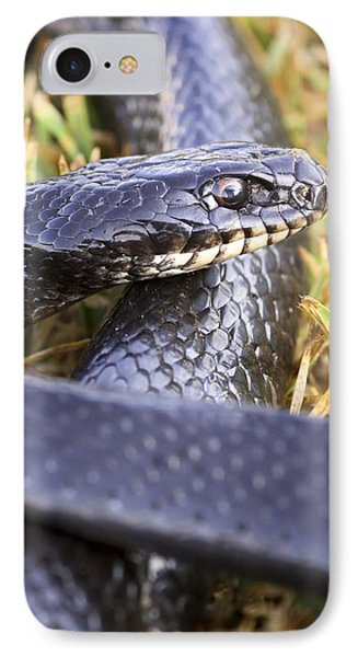 Large Whipsnake (coluber Jugularis) IPhone Case by Photostock-israel