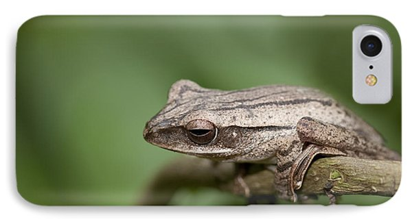Malaysia Frog IPhone Case by Zoe Ferrie