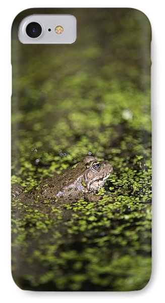 Marsh Frog Phone Case by Louise Murray
