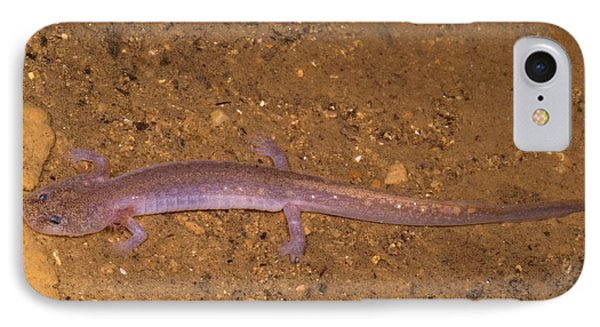 Ozark Blind Cave Salamander IPhone 7 Case by Dante Fenolio