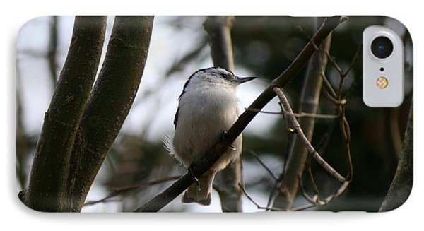 Perched And Content  Phone Case by Neal Eslinger