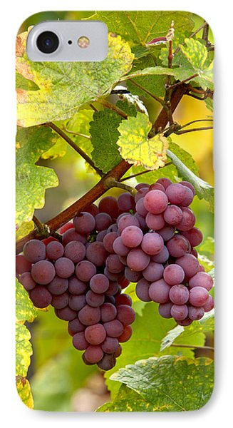 Pinot Noir Grapes Phone Case by Jeremy Walker