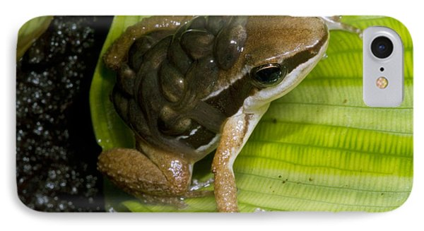 Pratts Rocket Frog With Young IPhone Case by Dante Fenolio
