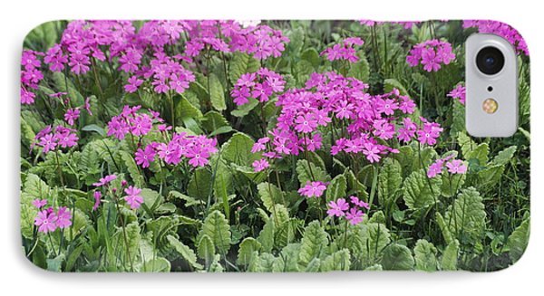 Primrose Flowers (primula Patens) Phone Case by Dr. Nick Kurzenko