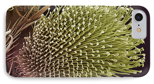 Pulvilli On A Fly's Foot, Sem Phone Case by Steve Gschmeissner