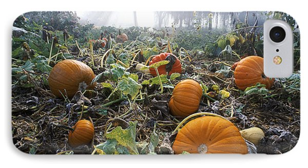 Pumpkin Patch, British Columbia Phone Case by David Nunuk