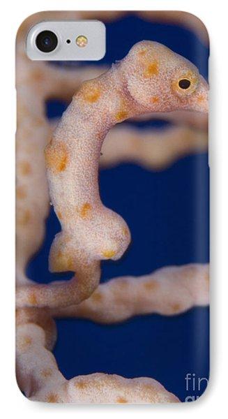 Pygmy Seahorse On Sea Fan, Papua New Phone Case by Steve Jones