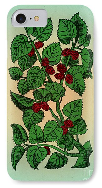 Red Mulberry Phone Case by Science Source