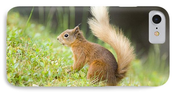 Red Squirrel Feeding Phone Case by Duncan Shaw