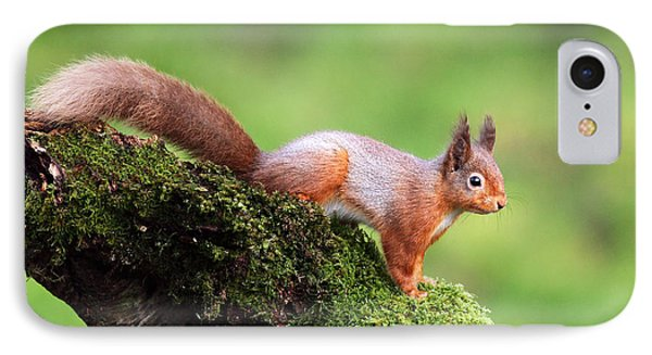 Red Squirrel IPhone Case by Grant Glendinning
