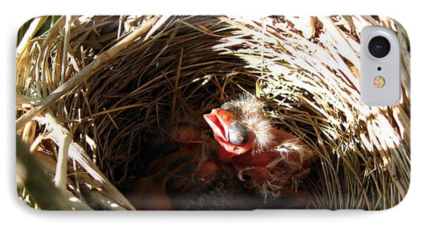 Red-winged Blackbird Babies And Egg Phone Case by J McCombie