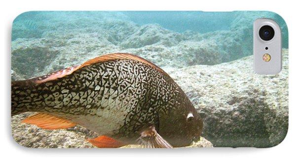 Redlip Parrotfish Phone Case by Michael Peychich
