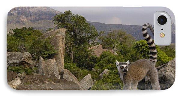 Ring-tailed Lemur Lemur Catta Portrait Phone Case by Pete Oxford
