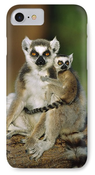 Ring-tailed Lemur Mother And Baby Phone Case by Cyril Ruoso