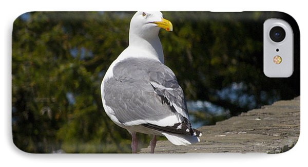 IPhone Case featuring the photograph Seagull by David Gleeson