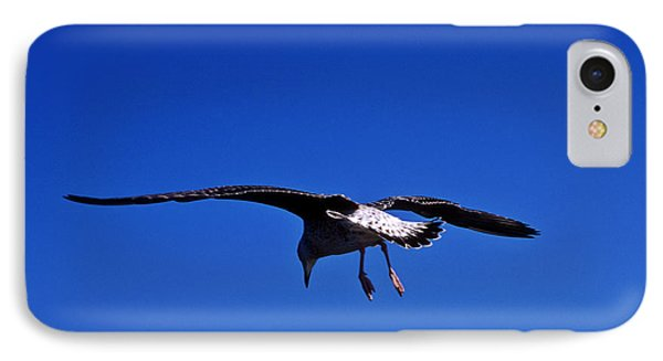 Seagull In Flight Phone Case by John Greim
