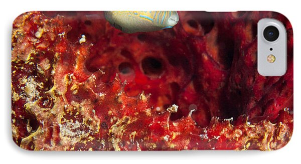 Sharp Nosed Puffer IPhone Case
