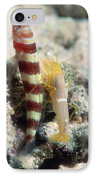 Shrimp Goby With Its Partner Shrimp Phone Case by Georgette Douwma