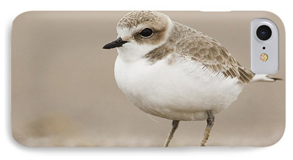 Snowy Plover In Winter Plumage Point IPhone Case