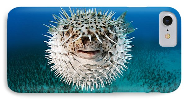 Spotted Porcupinefish Phone Case by Dave Fleetham