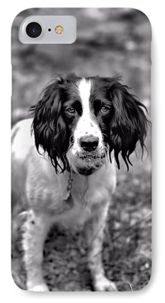 Springer Spaniel IPhone Case by Marlo Horne