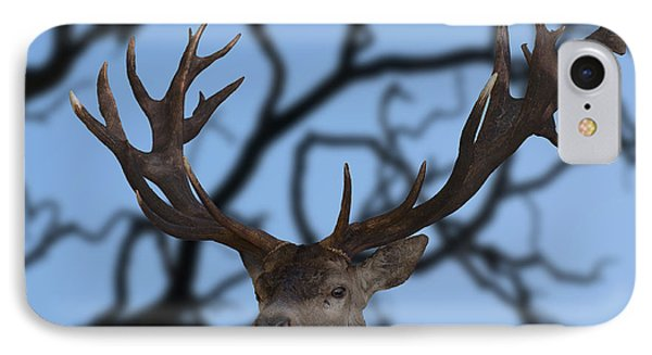 Stag Ramifications IPhone Case by Michael Mogensen