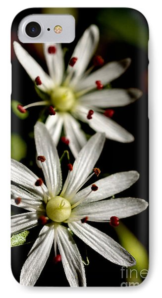 Star Chickweed Phone Case by Thomas R Fletcher