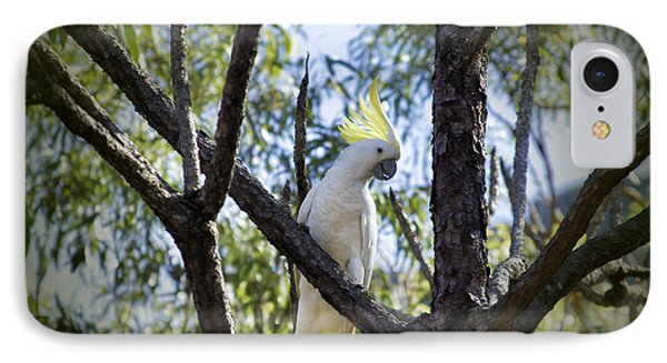 Sulphur Crested Cockatoo IPhone Case by Douglas Barnard