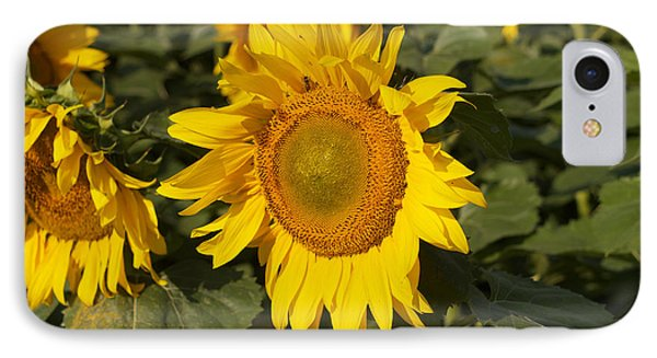 IPhone Case featuring the photograph Sun Flower by William Norton