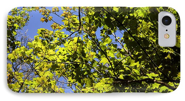 Sycamore Leaves (acer Pseudoplatanus) Phone Case by Dr Keith Wheeler