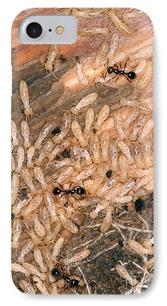 Termite Nest Reticulitermes Flavipes Phone Case by Ted Kinsman