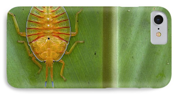 Tessaratomid Nymph Papua New Guinea Phone Case by Piotr Naskrecki