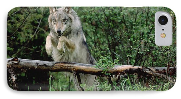 Timber Wolf Leaping Over Fallen Log IPhone Case by Tim Fitzharris