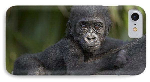 Western Lowland Gorilla Gorilla Gorilla IPhone 7 Case by San Diego Zoo