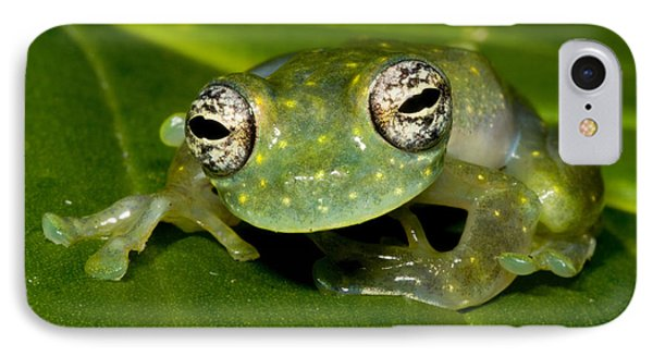White Spotted Glass Frog Phone Case by Dante Fenolio