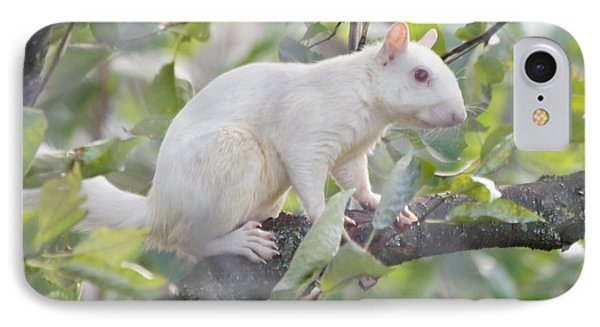 White Squirrel Phone Case by Robert E Alter Reflections of Infinity