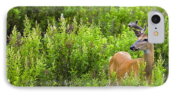 Whitetail Deer In Meadow, Killarney IPhone Case
