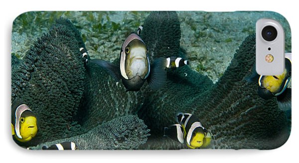 Whole Family Of Clownfish In Dark Grey IPhone Case by Mathieu Meur