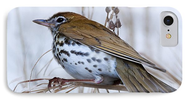 Wood Thrush IPhone Case by Ron Jones