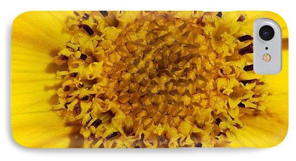 Yellow Flower Detail IPhone Case by Matthias Hauser