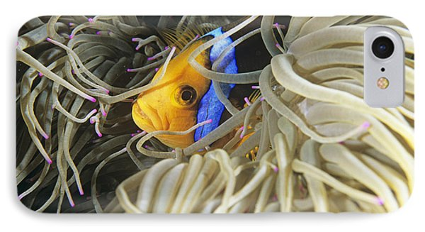 Yellowtail Anemonefish In Its Anemone Phone Case by Alexis Rosenfeld