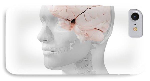 Head Anatomy, Artwork Phone Case by Sciepro